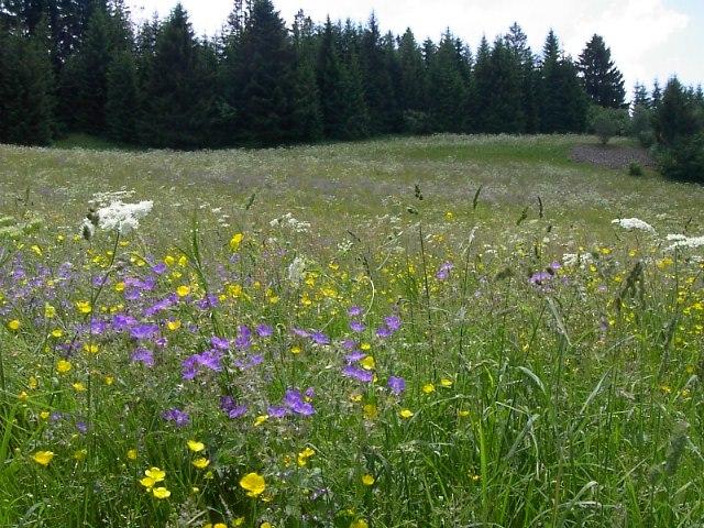 Alpine Scene Jura