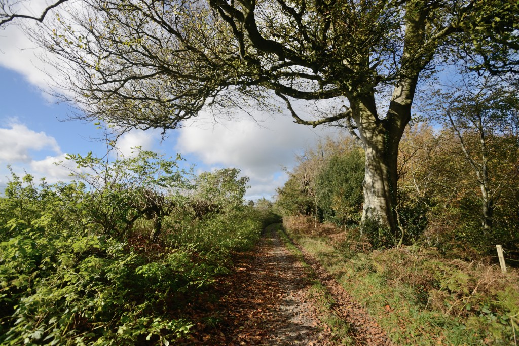 Walks from Coppice Retreat, Richard Aspinall