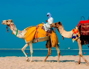 camels_love_my_trips_932569203