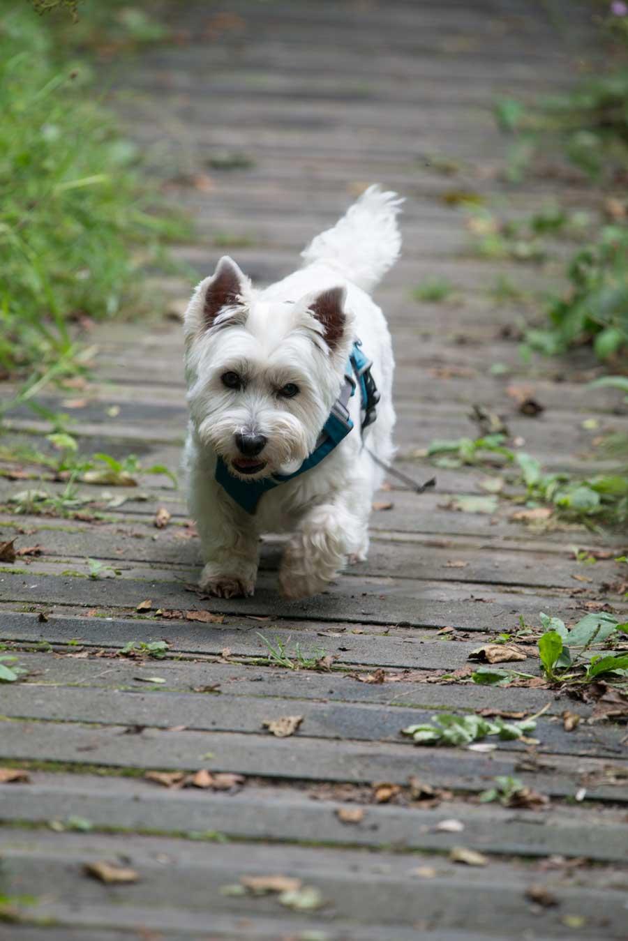 Tilly-on-boardwalk