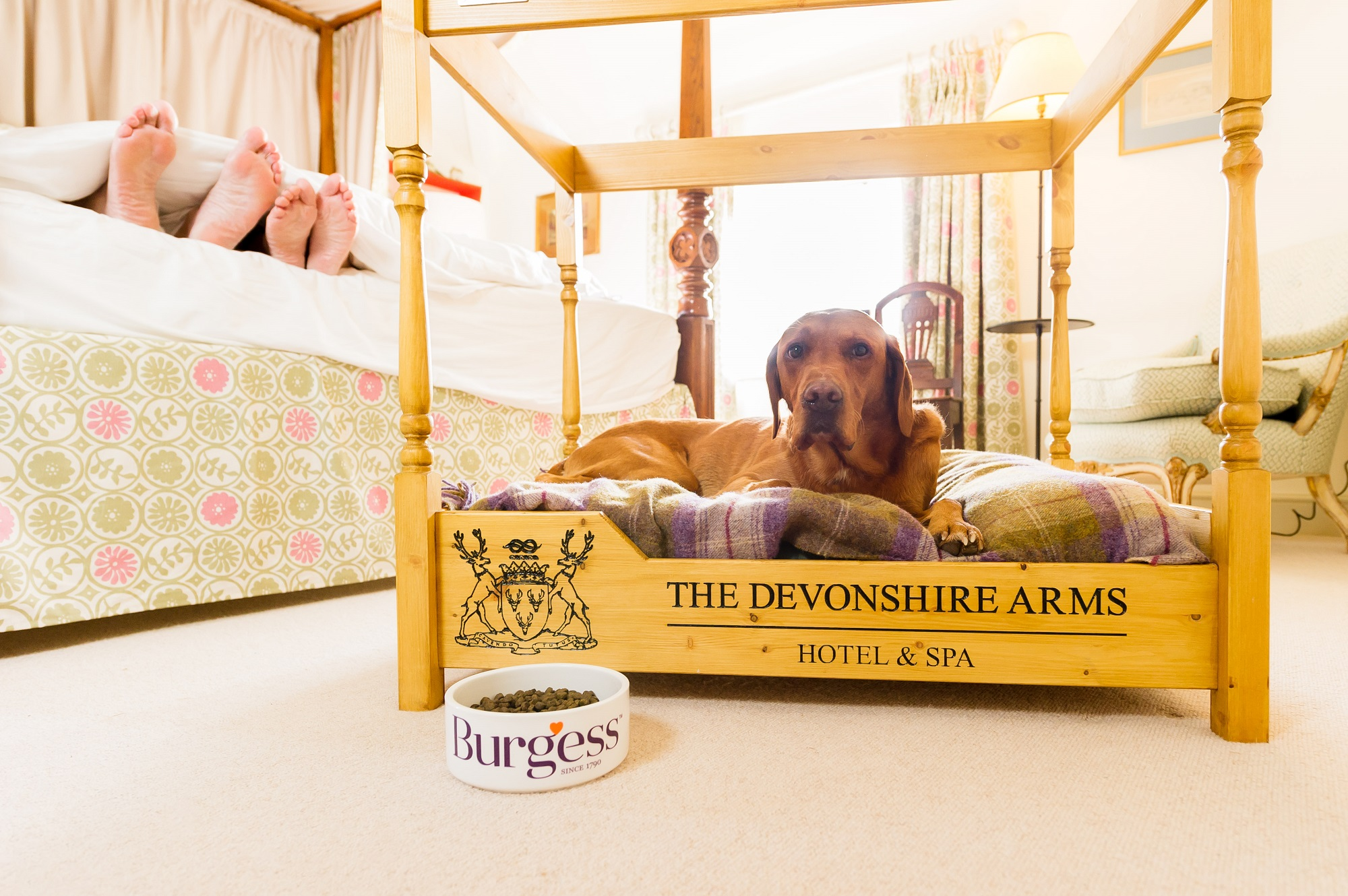 Picture of: The Devonshire Arms Hotel Spa Wins Pampered Pet Award In The Petspyjamas Dog Friendly Travel Awards Love My Trips