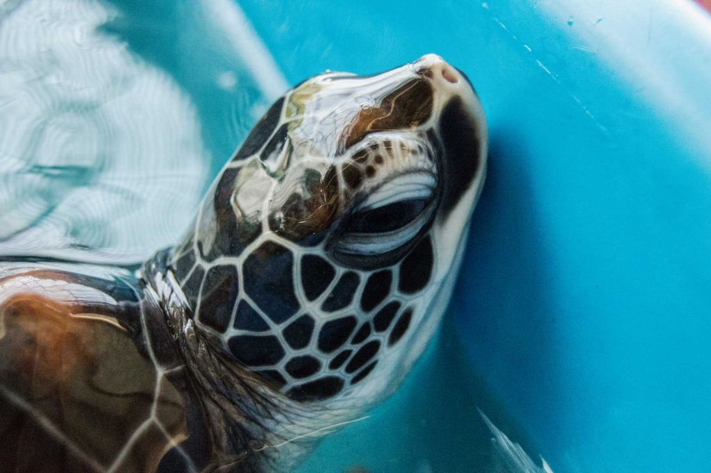 Turtle by Angie Aspinall