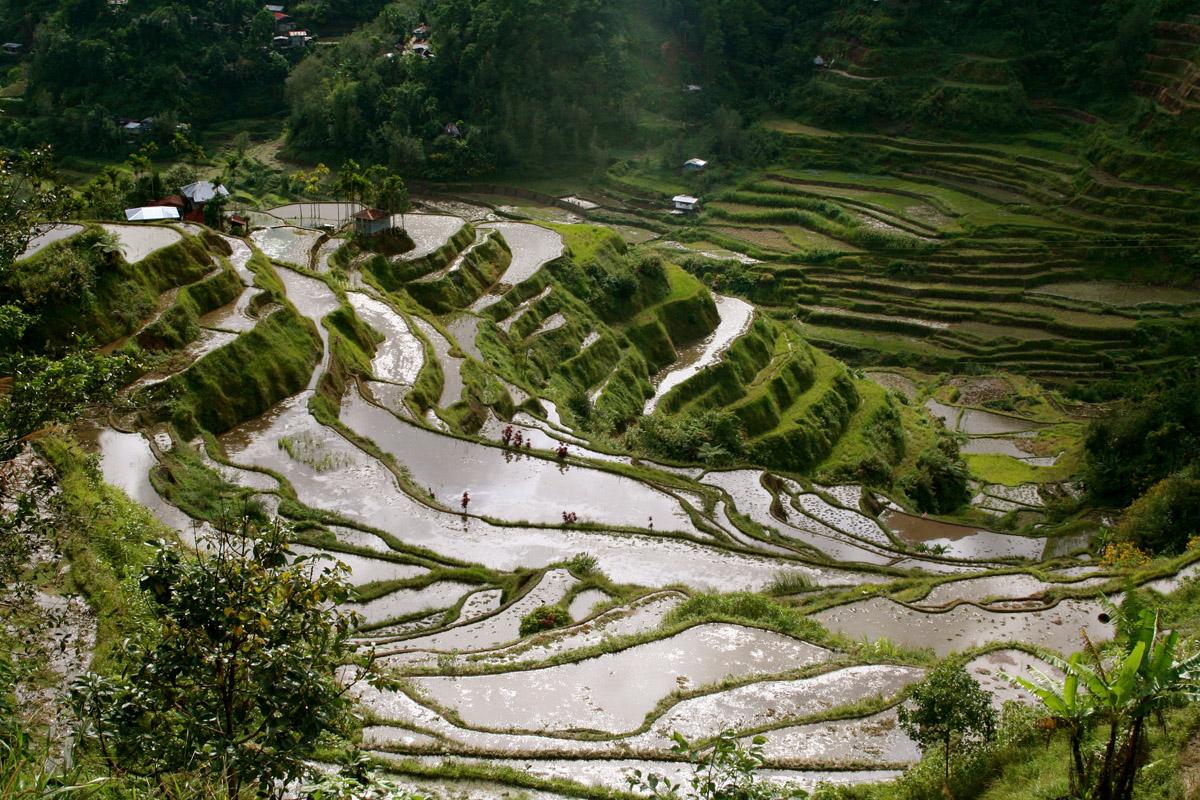banaue rice terraces, Phillipines